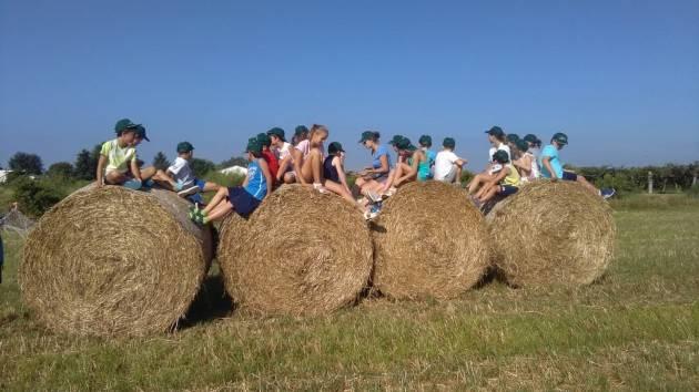Formazione – nuovi corsi online per aziende agricole e fattorie didattiche