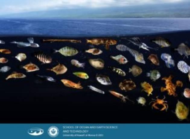 Le slick sulla superficie del mare creano autostrade interconnesse per molte specie di larve di pesci