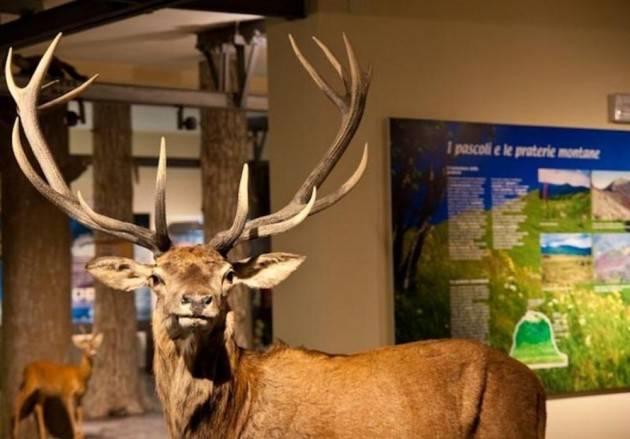 Piacenza Nuova luce in 5 palestre e al Museo di Storia Naturale
