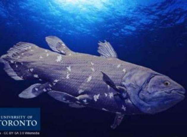 Il celacanto: un ''fossile vivente'' che continua a evolversi