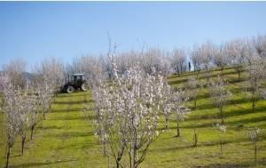 Calyx LA PASSEGGIATA DEI MANDORLI IN FIORE il 7 marzo a Varzi (PV)