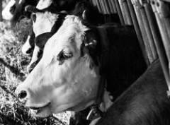 Ispra scagiona stalle e allevamenti italiani