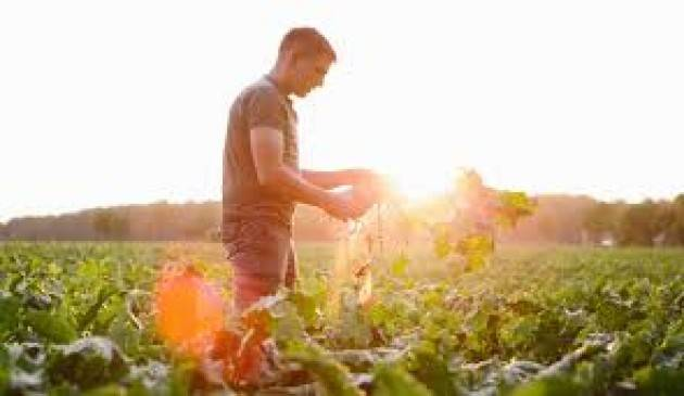 Bando giovani agricoltori