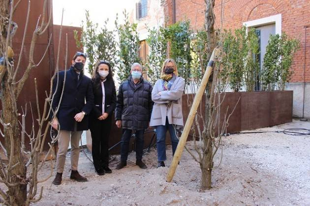 Cremona Cortile  Museo Archeologico completata prima fase nuova piantumazione
