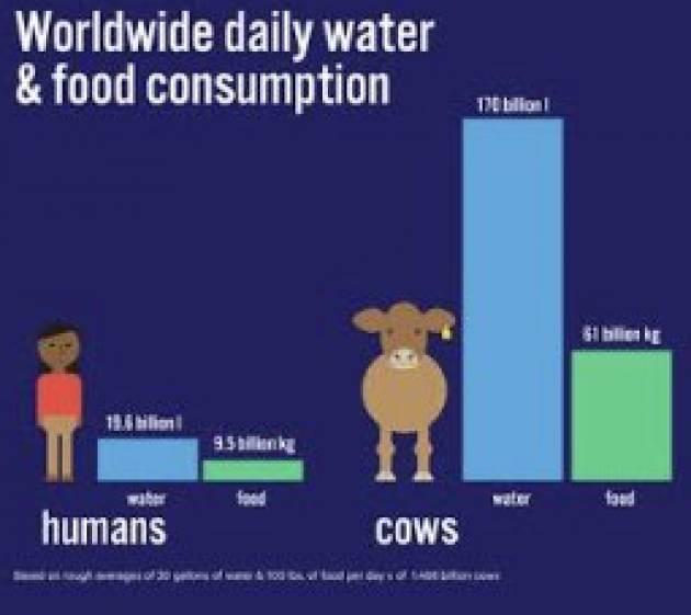 Giornata mondiale Acqua 22 marzo : AICS, NO a carne allevamenti intensivi