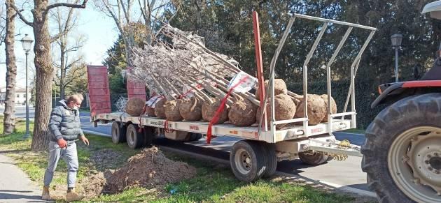 Crema iniziati i lavori di posa di settanta alberi lungo il Viale Santa Maria (Video)
