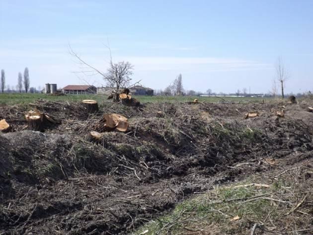 Abbattuto un filare di piante  lungo il confine tra Agnadello e Pandino