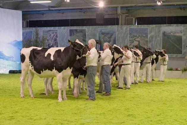 Cremona La Mostra nazionale del bovino da latte si fa qua, con o senza Anafij | Paolo Carletti