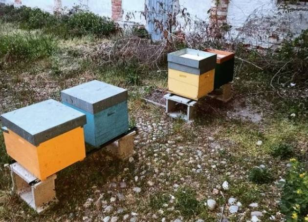 cremona_urban_bees Posizionamento Arnie!