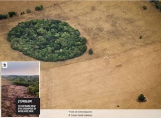 L'Unione europea è il secondo importatore globale di deforestazione tropicale
