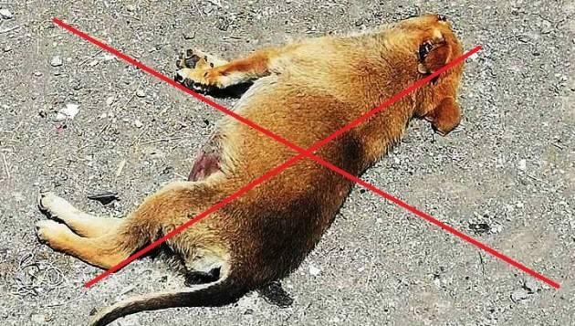 Prefettura Cremona Prevenzione e contrasto avvelenamenti animali affezione.