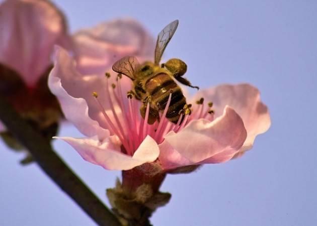 Coldiretti Lombardia Giornata mondiale Terra, sos api con clima pazzo