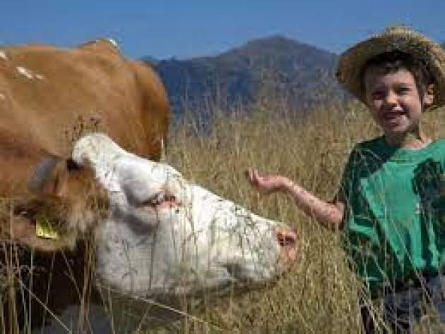 Progetto didattico, ''una mucca per amica'' con le allevatrici di Coldiretti
