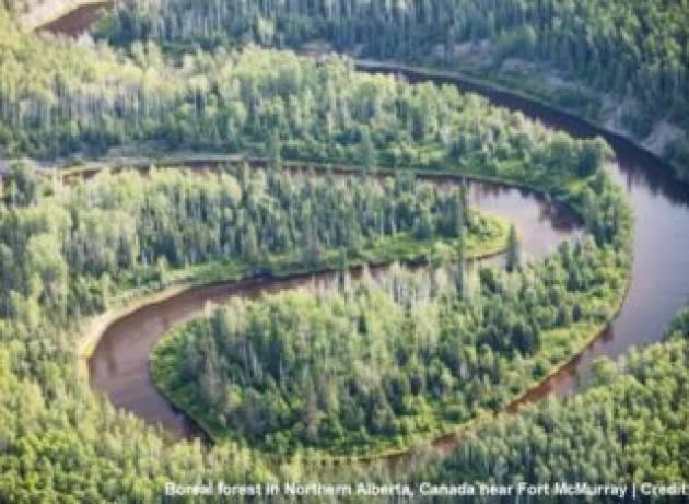 Dal 2000 si sono rigenerate foreste su un'area grande come la Francia