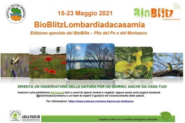 Cremona Dal 15 al 23 maggio appuntamento con Bioblitz