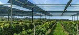 Ecco come l'agrivoltaico può contribuire ad aumentare la resilienza del settore agroalimentare