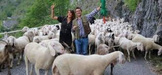 Lecco invasa da 3mila pecore per la transumanza