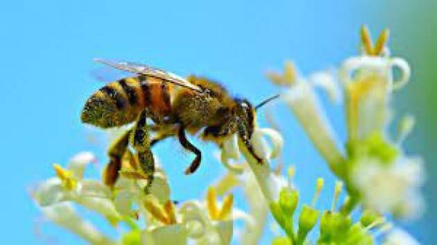 Biodiversità, Europarlamento: proteggere il 30% delle aree terrestri e marittime