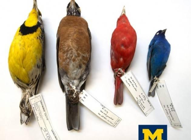 Basta spegnere le luci per evitare che gli uccelli migratori si schiantino contro gli edifici