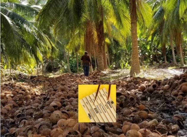 I sostituti della plastica made in Jamaica