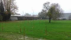 Lega Ambiente Cremona Intervento edilizio in via Trebbia e taglio aree a bosco