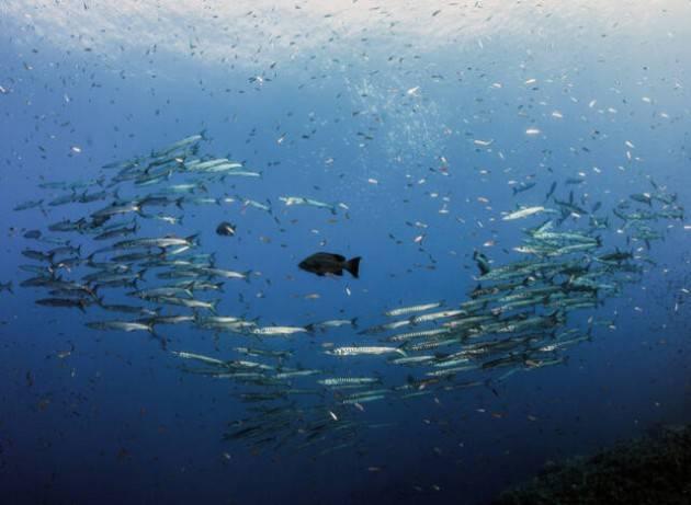 Mediterraneo e Mar Nero: nuova strategia per la pesca e l'acquacoltura sostenibili