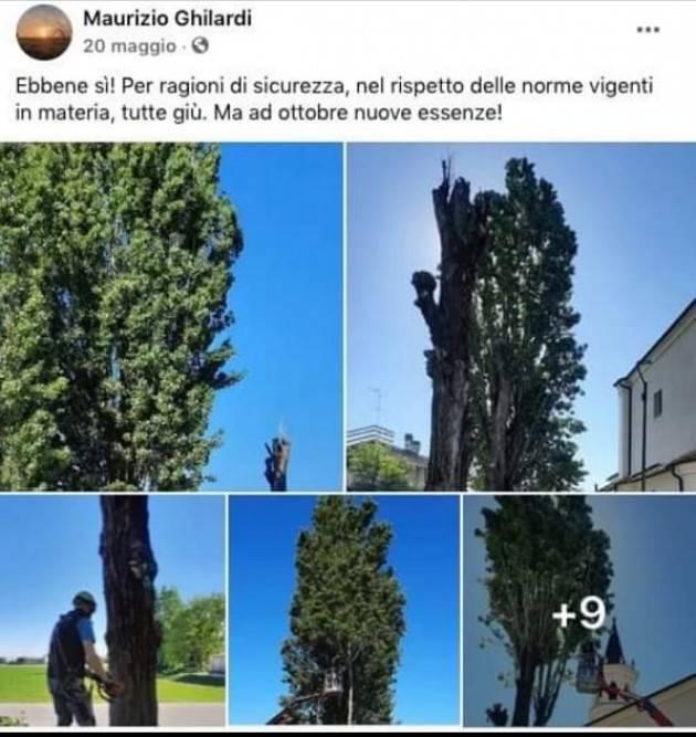 Gli alberi tagliati in Via Crocile (lato chiesta Boschetto) saranno sostituiti da nuove essenze.