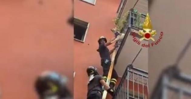 Cane sospeso nel vuoto a Milano