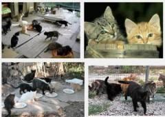 Firma Petizione per Ottenere una nuova sede del Gattile di Cremona  più idonea