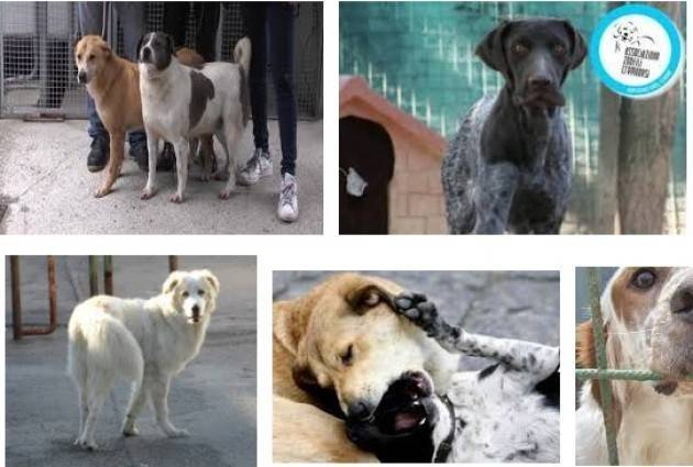 Cremona Sopralluogo al canile  animali in buono stato di salute
