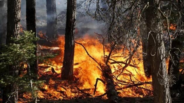 WWF Italia Dona ora per fermare l'emergenza incendi