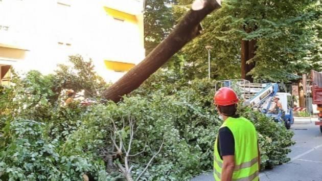 Firma Petizione Fermiamo il taglio degli alberi a Cremona
