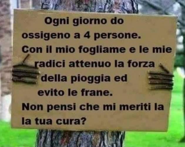 Cremona  Taglio Alberi  Maria grazia Nicolini scrive al difensore civico