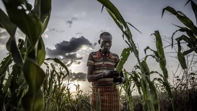 Cresce l'insicurezza alimentare nel mondo