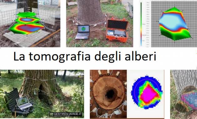 Cr Taglio Alberi Gli ambientalisti chiedono a Galimberti la tomografia alberi