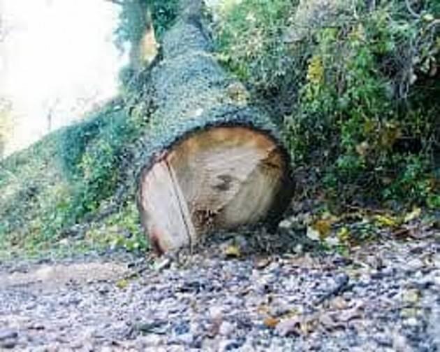 Anche Giovanni Pascoli era contrario al taglio degli alberi