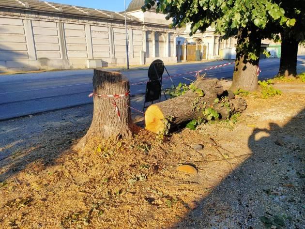 Piantiamo un albero per abitante   Comunità Laudato SI'