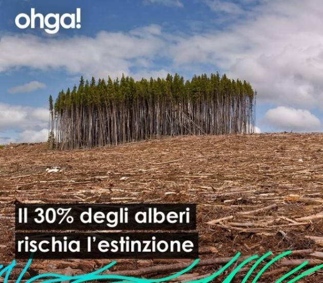 ohga! Il 30% degli alberi rischia estinzione