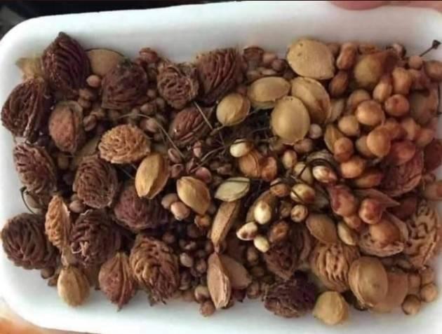 Massimo Ciani Butta i semi della frutta che mangi dove non  trovi alberi