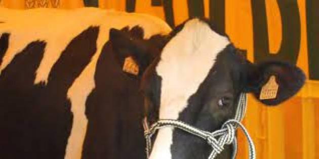 Latte, Voltini: bene tavolo nazionale per la messa in sicurezza di un settore strategico
