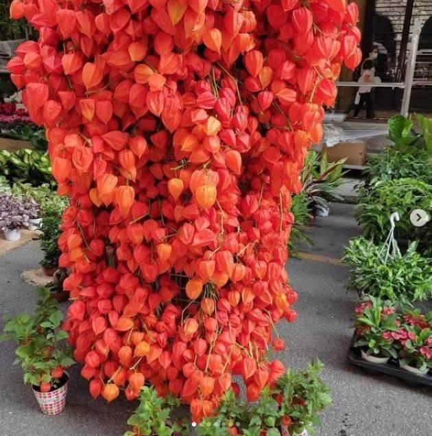 Cremona Un successo le 'Invasioni Botaniche' del 2021