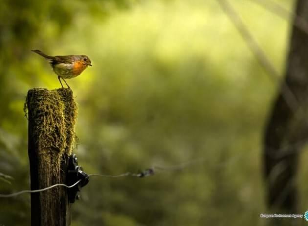 Strategia forestale Ue e biodiversità, Corte dei conti europea: ''Risultati positivi ma limitati''