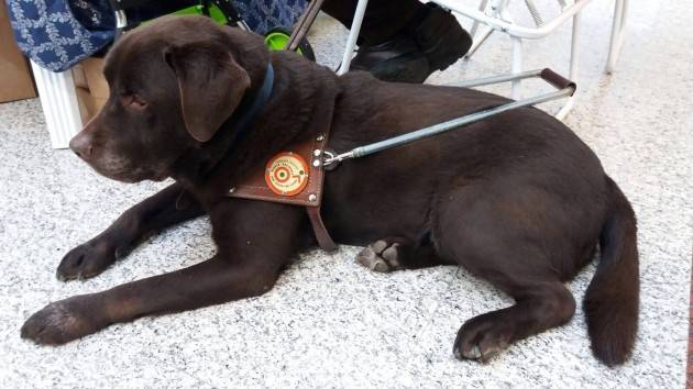 UICI Faccio il cane guida UN MESTIERE DAVVERO SPECIALE  Di Flavia Tozzi (CR)