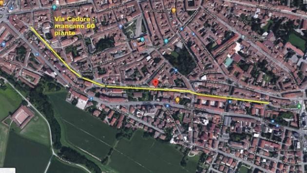 (Cr) Via Cadore n. 60 Alberi Tagliati mai sostituiti (-797  totale)